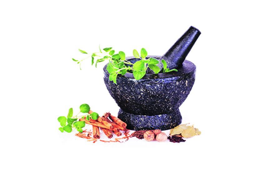 ayurvedic medicines, information , ayurvedic treatment, ajicha batwa, Chaturang, Chaturang news, Loksatta, Loksatta news