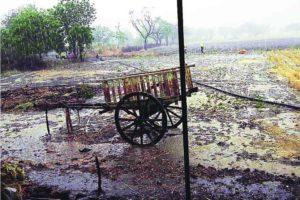 वकाळी पावसाने शेतात पाणी झालेच, पण तुरीसह साठवणही पाण्यात गेली