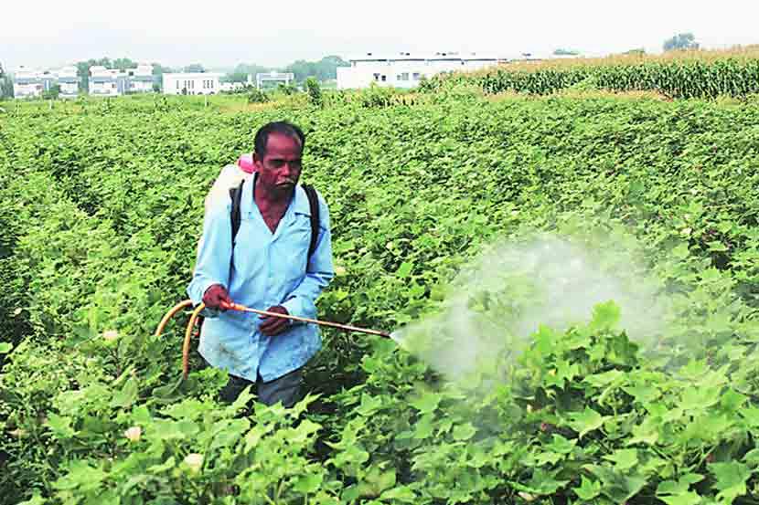 Maharashtra government , Farmers, CBI probe of Farmers , pesticides poisoning , Loksatta, Loksatta news, Marahti, Marathi news