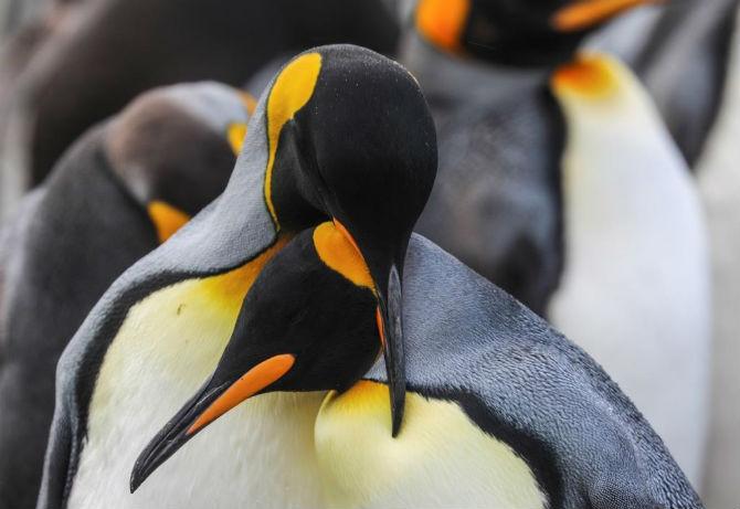पेंग्विन, झोपलेले सील मासे, उडणारे पक्षी, रानटी मांजरांच्या आयुष्याच्या छटादेखील त्याने अतिशय वेगळ्या पद्धतीने छायाबद्ध केल्या आहेत.