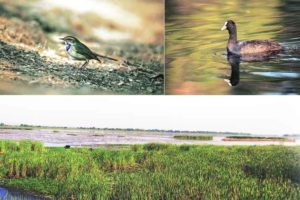 Nandur Madhmeshwar Bird Sanctuary Nashik