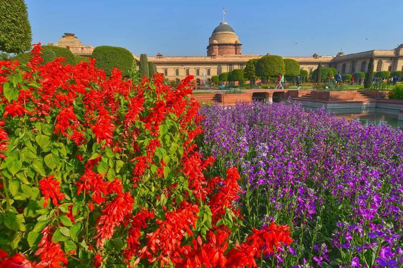 ट्युलिप्स व्यतिरिक्त येथे अनेक रंगांच्या फुलांची उधळण पाहायला मिळते. (छाया सौजन्य : PTI)