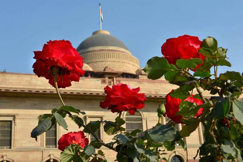 राष्ट्रपती भवनातील मुघल गार्डन म्हणजे मुघल साम्राज्याच्या ऐश्वर्यपूर्ण सौंदर्याचा नजराणा आहे. या बागेवर मुघल-ब्रिटिश सौंदर्याची छाप आहे. (छाया सौजन्य : PTI)