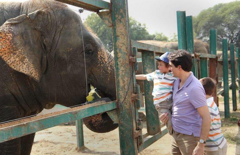 मथुरा येथील हत्ती अभयारण्य भेटीदरम्यान हत्तीला केळी भरवताना..