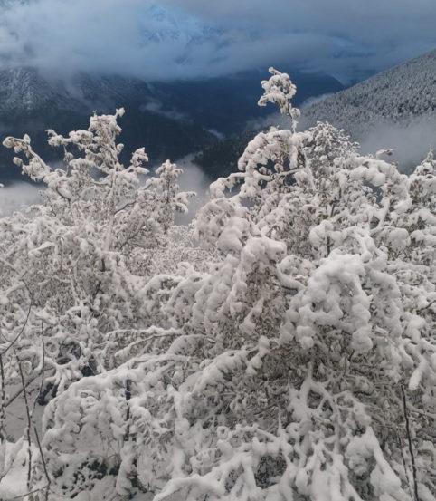 हिमाचल प्रदेशमधील पांगी मधील बर्फवृष्टी