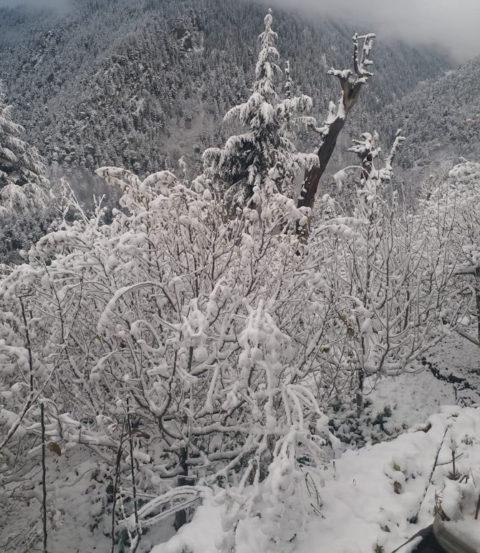 हिमाचल प्रदेशमधील पांगी प्रदेशातील बर्फवृष्टी