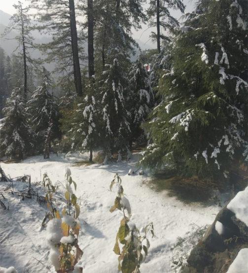 नारकंडा येथील बर्फवृष्टीनंतरची नयनरम्य दृष्ये