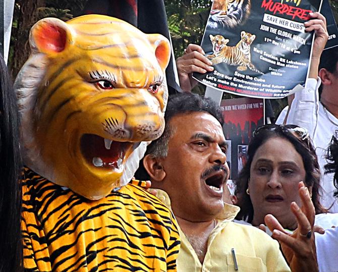 वनमंत्री सुधीर मुनगंटीवार यांनी राजीनामा द्यावा, अशी मागणी मुंबई काँग्रेस अध्यक्ष संजय निरुपम यांनी यावेळी केली.